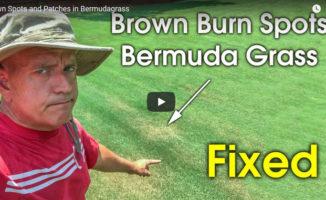 burn out spots in lawn