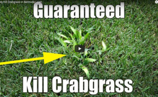kill crabgrass in bermuda