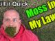 kill moss in lawn