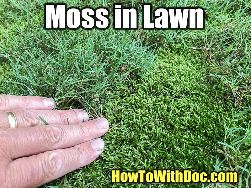moss in bermuda grass