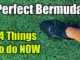 perfect bermuda lawn tips