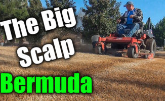 scalping bermuda lawn video