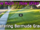watering bermuda lawns