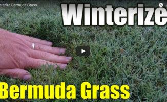 winterize bermuda lawn