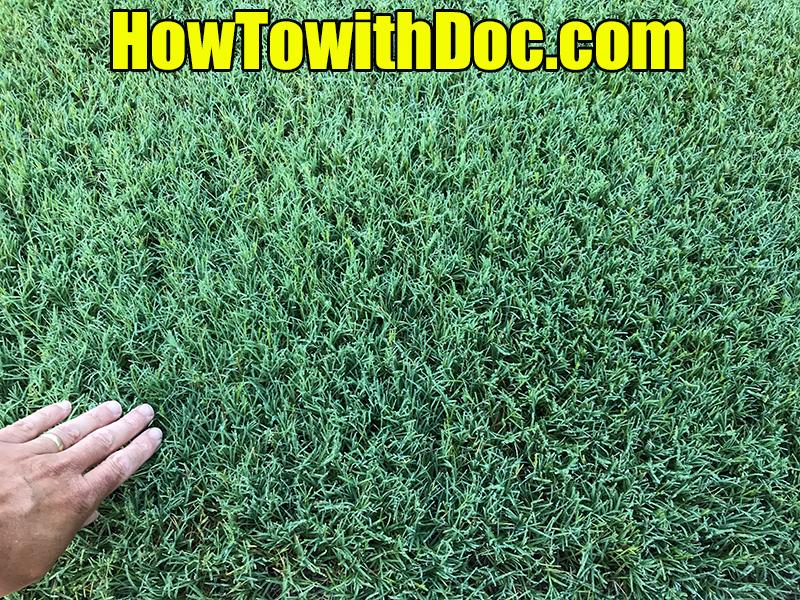 bermuda grass fertilizer treatments