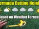 bermuda lawn cutting height