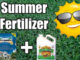 best summer fertilizer