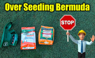 over seeding bermuda grass