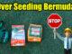 over seeding bermuda grass