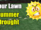 summer lawn care drought