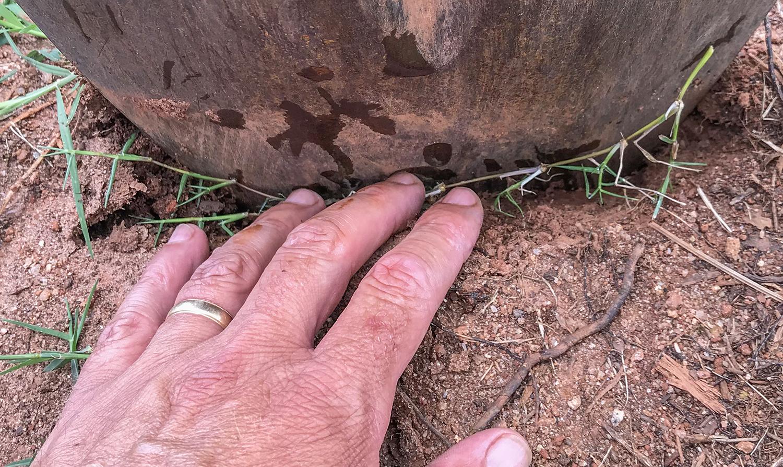 bermuda grass repair