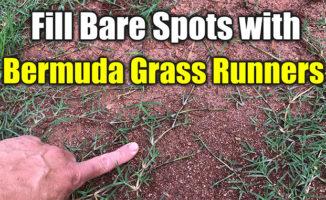 fix bare spots bermuda grass