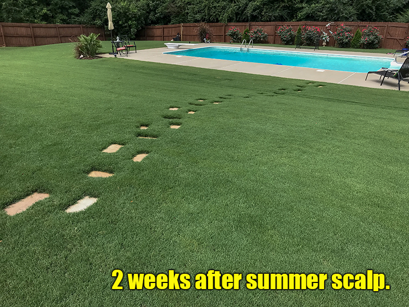 scalping bermuda grass lawn