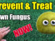 treat lawn disease fungus