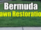 bermuda lawn restoration