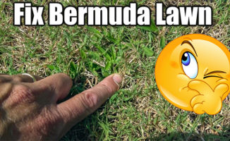 fix bermuda lawn