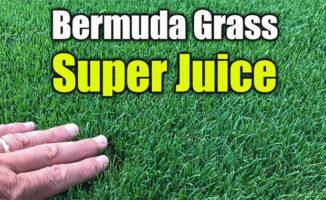 liquid lawn fertilizer sprays