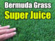 liquid lawn fertilizer sprays