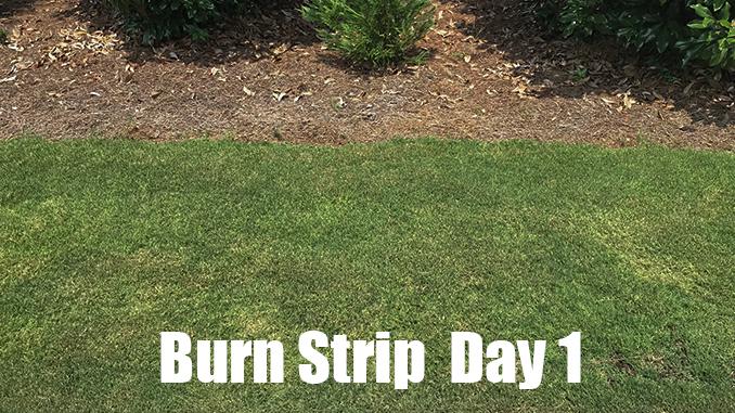 organic lawn fertilizer burn
