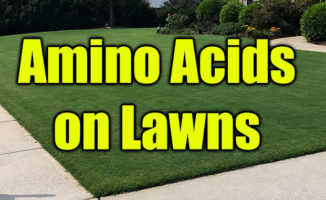 amino acids on lawns