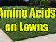 amino acids on lawns