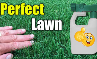 green up lawn fast