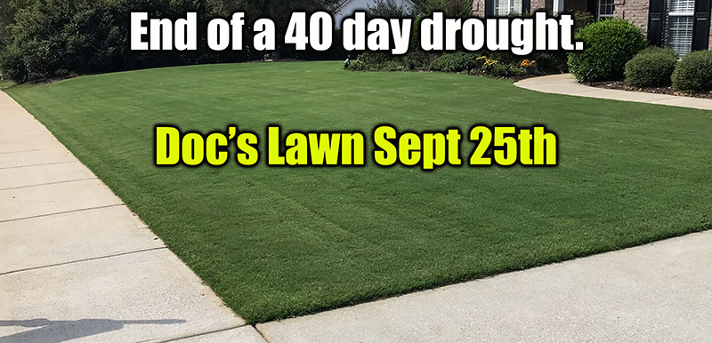 amino acids on healthy bermuda grass lawn