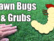 lawn bugs and grubs
