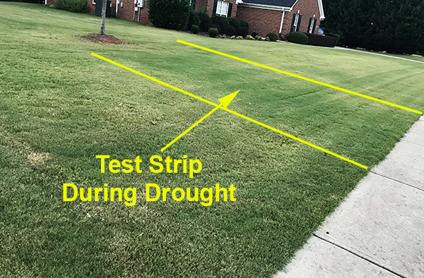 amino acids on lawns testing strip