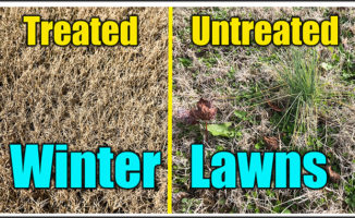 winter lawn weeds treatments