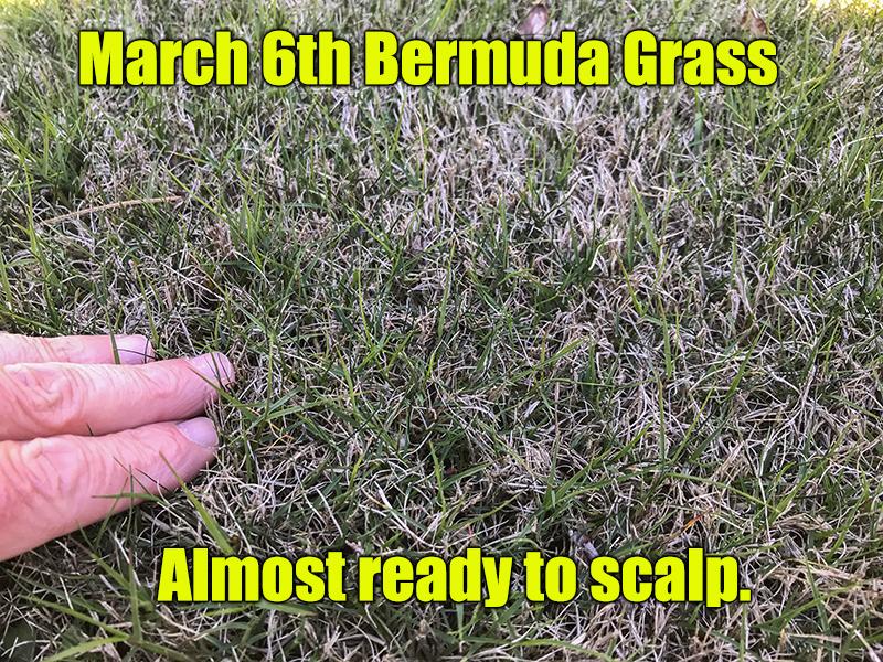 spring bermuda lawn fertilizer