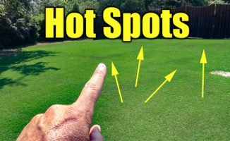 lawn hot spots