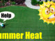 summer heat bermuda grass