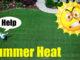 summer heat bermuda grass