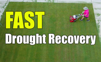 lawn drought recovery