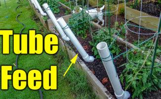 tomato garden watering