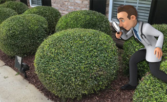 trimming round bushes