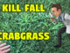 kill fall crabgrass