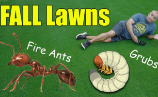 fall lawn tips and lawn care