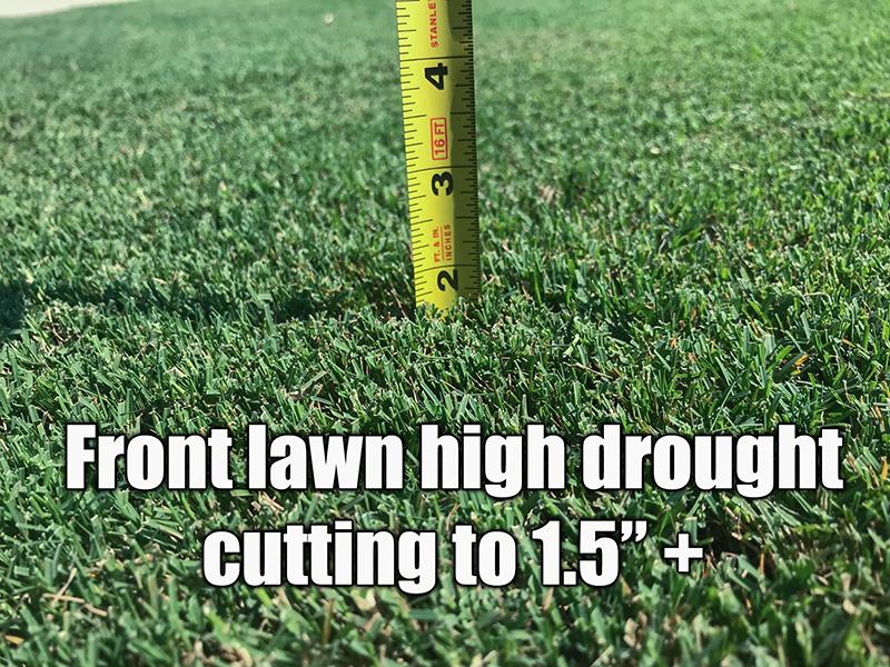 bermuda grass cut high drought