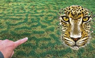 Bermuda Lawn Leopard Pattern