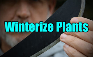 winterize plants
