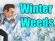 winter weeds lawn