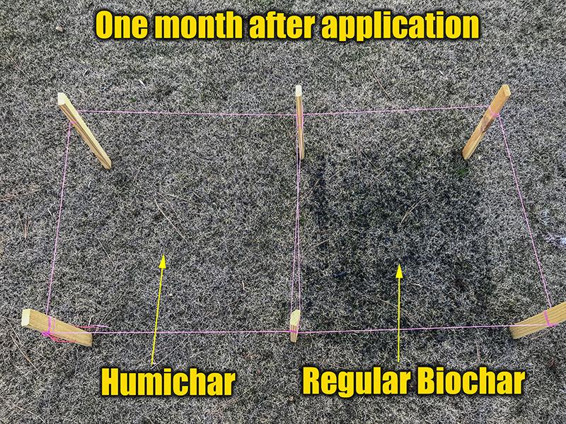 biochar spread on lawn