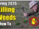 kill weeds in bermuda lawn