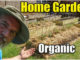 home vegetable garden organic