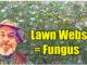 lawn fungus webs