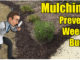 mulching beds and gardens