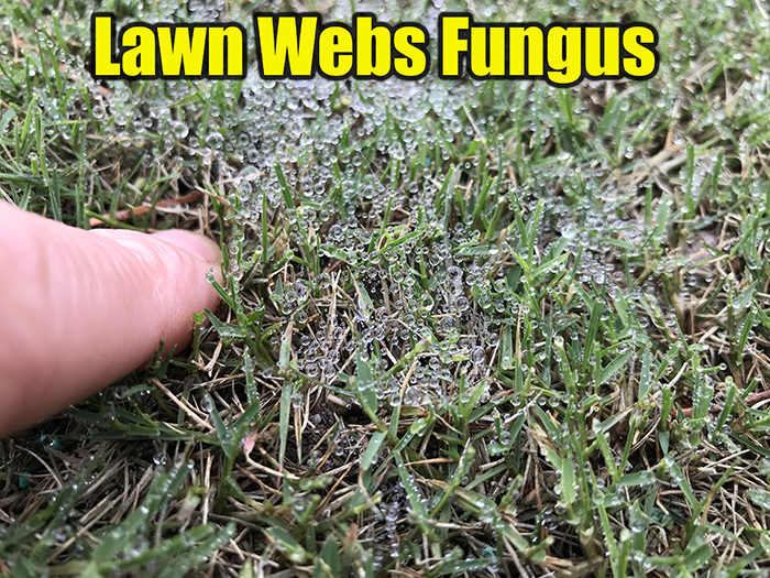 small webs on lawn