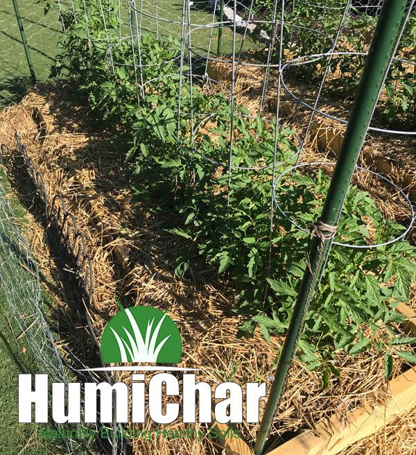 biochar humichar tomato